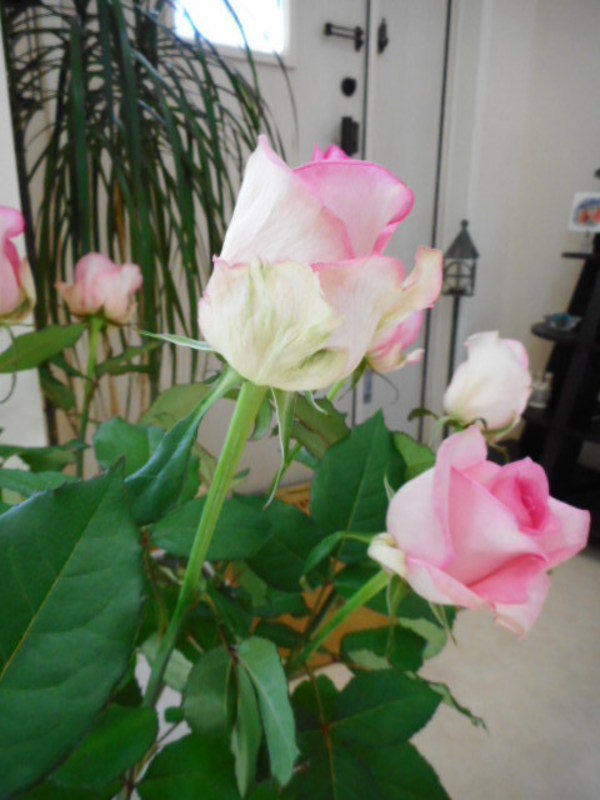 今週のお花❀