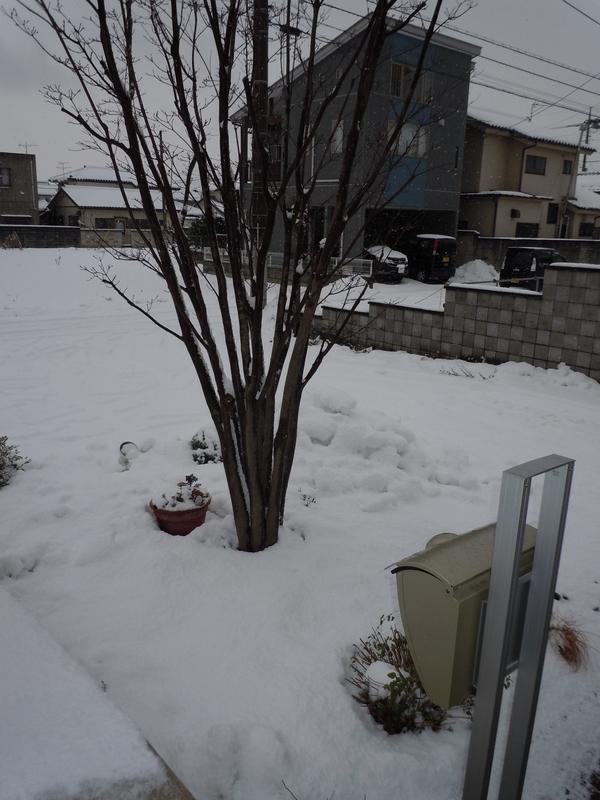 またまた、雪(-_-;)