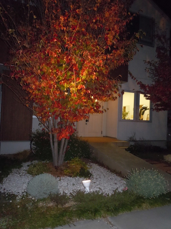 紅葉…夜の様子